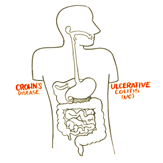 Illustration showing a digestive tract